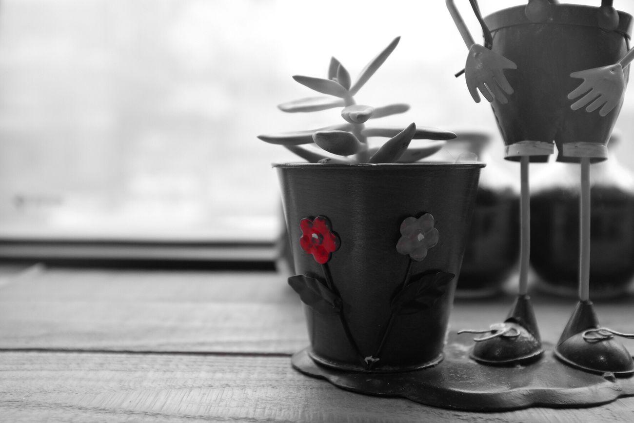 Flowers Mono Monochrome Monored Snap X100t Fujifilm FujiX100T Daily Landscape
