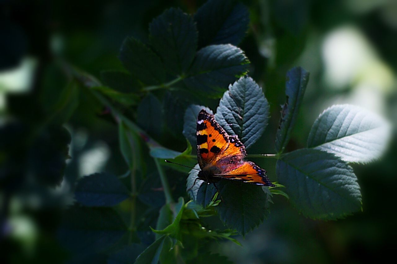 one animal, animal themes, animals in the wild, nature, leaf, insect, outdoors, no people, day, green color, plant, beauty in nature, animal wildlife, close-up, freshness