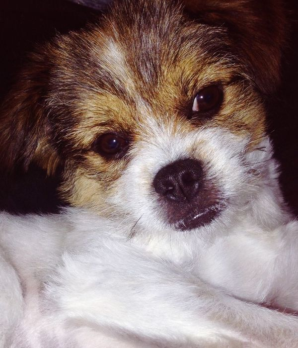 leo sinclair Cute Pets Leo 🐶