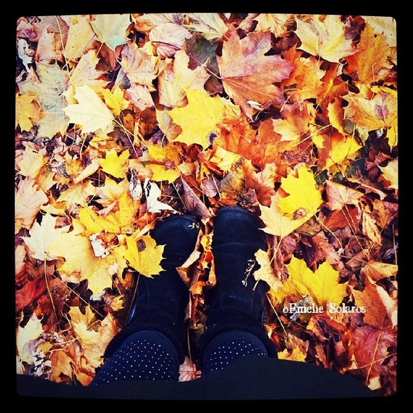 There goes fall with it change of weather and the changes of leaves. Never one to keep it's promises but changes it mind with a drop of a hat. Se la vi. Fall Photo Photograph Inspiration Instapic Instagram Fallseason Changeofseason Cymera Colours Boots Itsfall