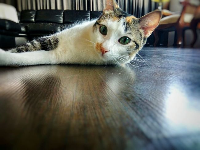 Cute Eyes ❤ Cateyes Cat Photography Cats 🐱 Catlovers Cats Of EyeEm Catoftheday Cat Love Taking Photos Pet Photography Popular Hello World Check This Out Popular Photos Ilovemycat MyLifeMyWorldMyEverything Mybaby Cat Lovers Magic Moments EyeEm Gallery Love ♥ Petlove  Sophie❤ Petlove