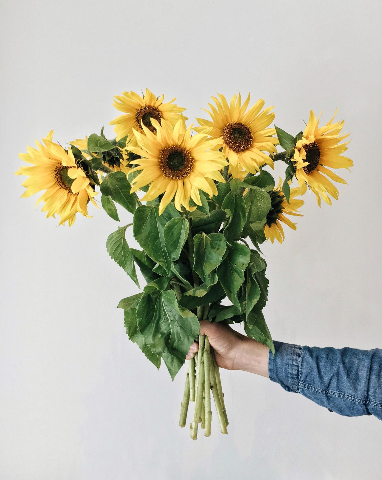 Beautiful stock photos of sunflower,  Bunch Of Flowers,  Cropped,  Finland,  Flower