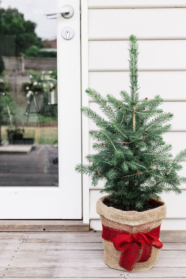 Small Christmas tree on outdoor deck Christmas Christmas Decoration Christmas Tree Day Green Color Indoors  No People Outdoors Plant Timber Deck Tree Wooden House