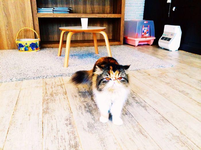 Ssuuupppp Purr Cat Cafe Club, Bangkok