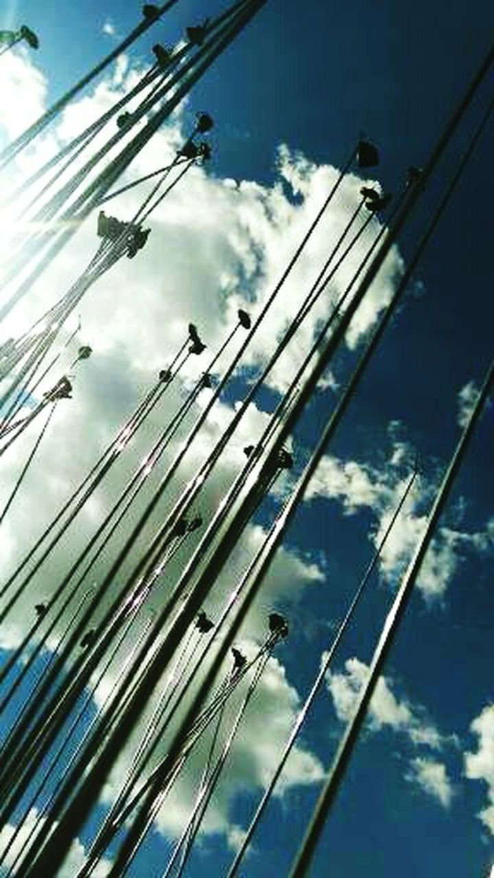cable, sky, cloud - sky, no people, one animal, day, low angle view, outdoors, animal themes, close-up, bird, nature, telephone line, perching