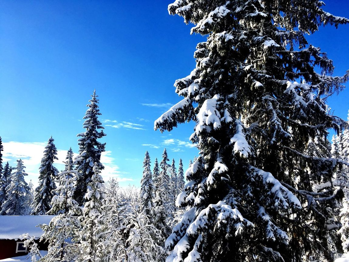 Snow Winter Cold Temperature Nature Tree Beauty In Nature Tranquility Scenics Tranquil Scene Weather Non-urban Scene Growth Day Outdoors No People Mountain Sky