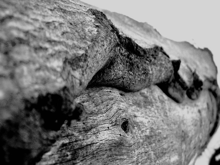 Blackandwhite Black And White Photography Blackandwhite Photography Black & White Trees Tree Bark Taking Photos Bark Bark Texture Wood Grain Tree Skin Textures And Surfaces Texture Angle Shot Close Up Nature Photography