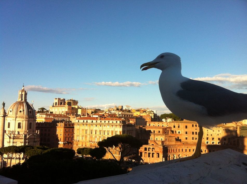 Roma Traveling Street