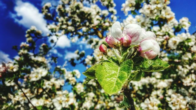 Blossom Outdoors Beauty In Nature No People Tranquil Scene Freshness Beginnings Focus On Foreground Agriculture
