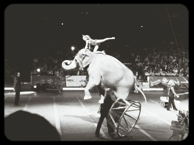 traveling back in time watching the Ringling Bros circus