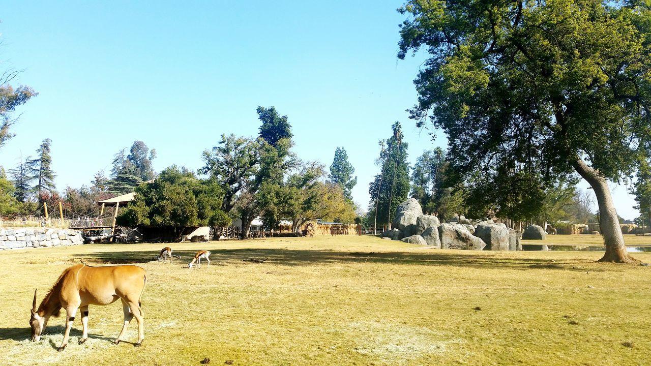 Fresnochafeezoo Chafee Zoo Fresno  Fresno County Fresno Ca California Safari Adventure Zoo Animals