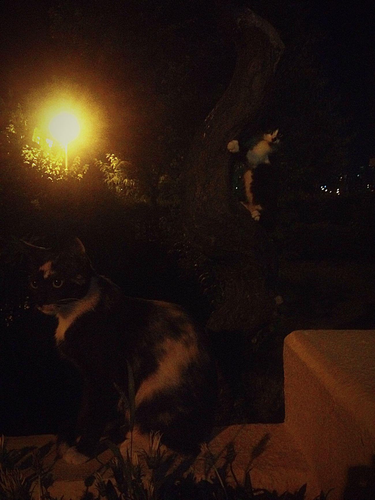 Cat Cats Cat♡ Catsofinstagram Cat Lovers Cute Cats Istanbulunkedileri Mom Motherofcats Tree