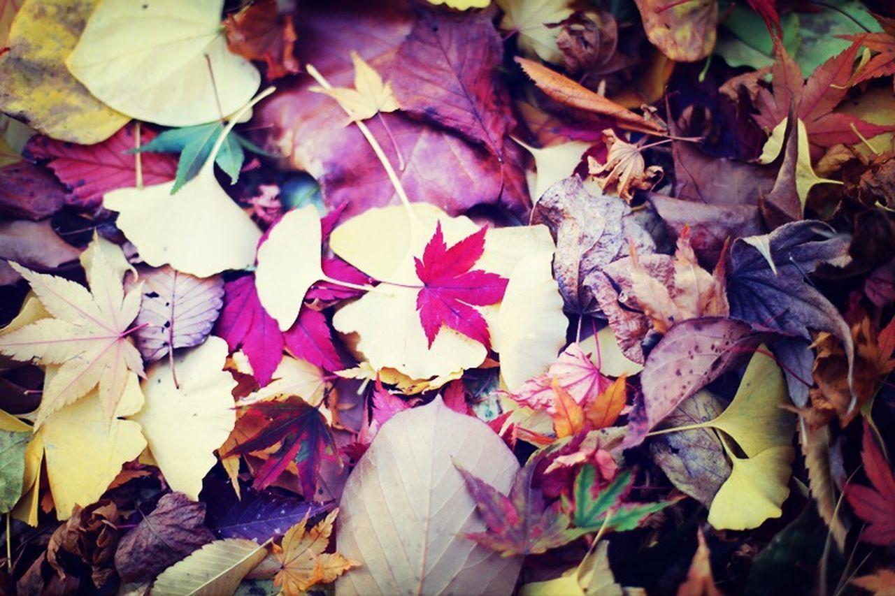 autumnal tints Beautiful Nature Fallen Leaves Autumnal Tints