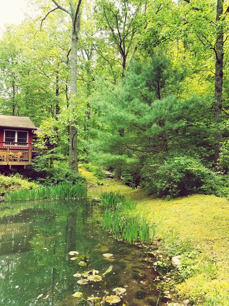 Green Color Hanging Out Nature Vacations Tranquility Mountain Cabin Blue Ridge Mountains Luray Cabin pond Forest Jewell Hollow Hollow