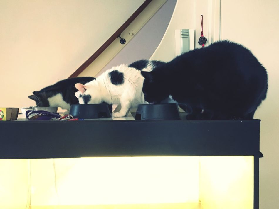 Pets My Cats Eating!