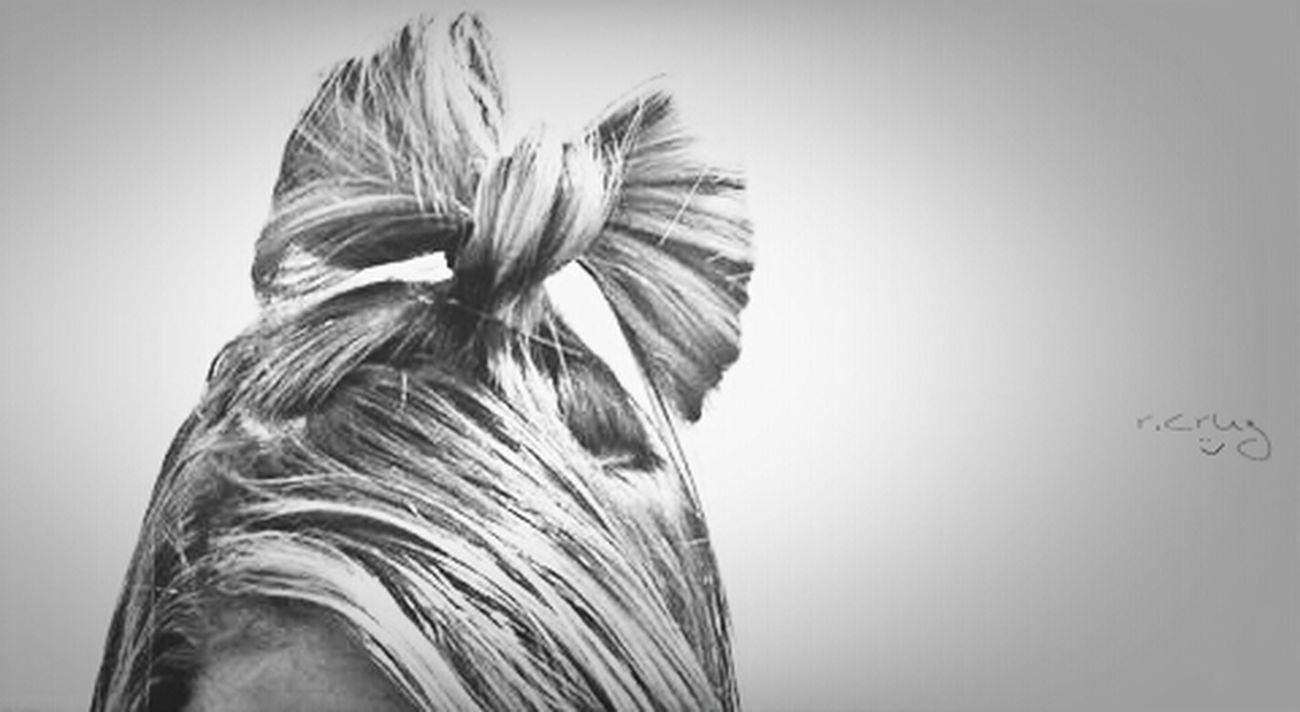 Hair Hair Style