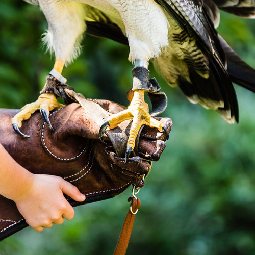 Eagle claws & kiddie hand Eagle Green Color Animal Wildlife Animals In The Wild Bird Claw Claws Close-up Day Domestic Animals Focus On Foreground Food Holding Human Body Part Human Hand Leisure Activity Lifestyles Mammal Men Nature One Animal One Person Outdoors People Real People