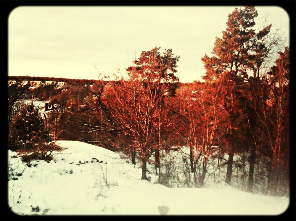 View from my last lession Winter Stockholm Trees Gustavsberg ?????❄️