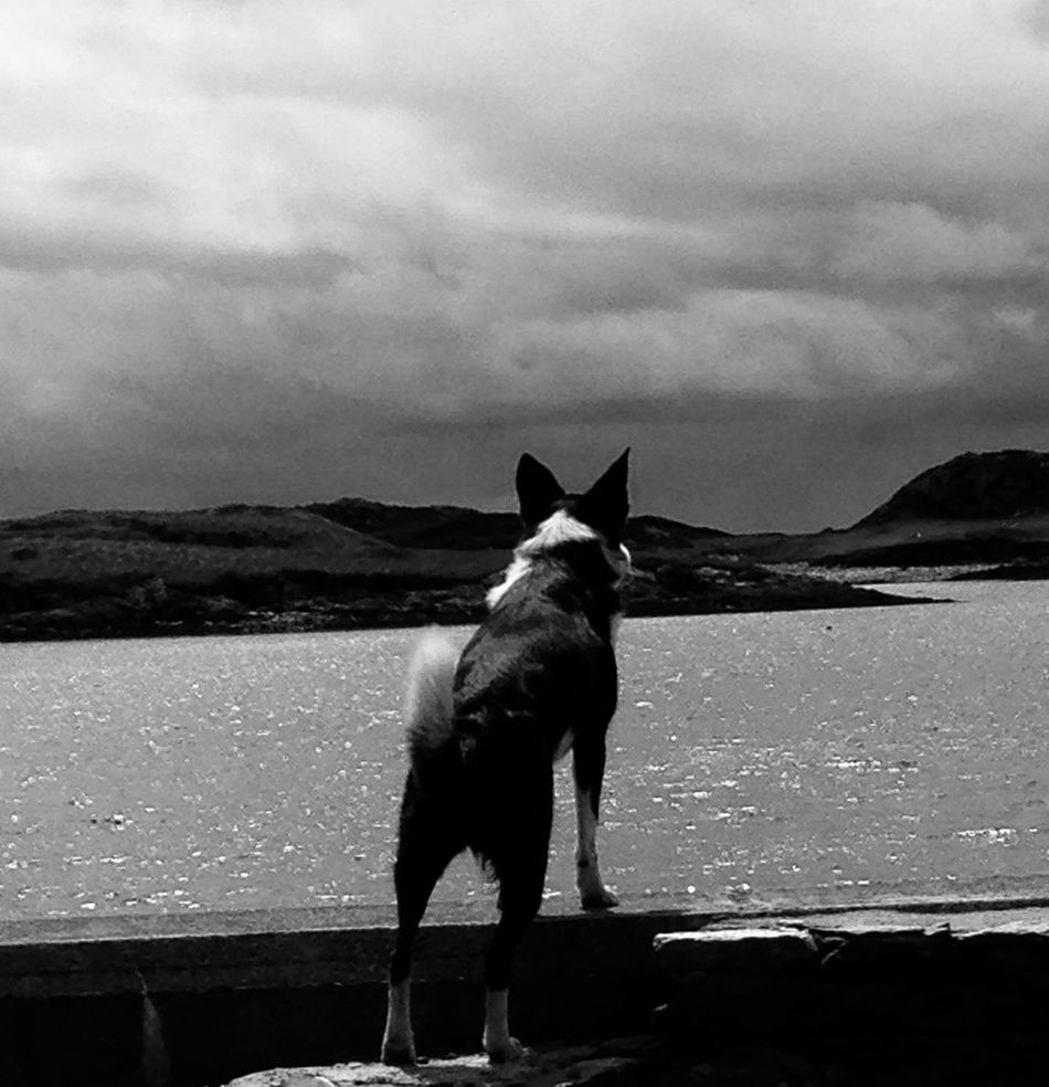 Waiting!!.. EyeEm Best Shots - Black + White NEM Submissions EyeEm Best Edits Every Picture Tells A Story EyeEm Gallery EyeEm Best Shots EyeEm Black&white! Pets Corner EyeEm Nature Lover