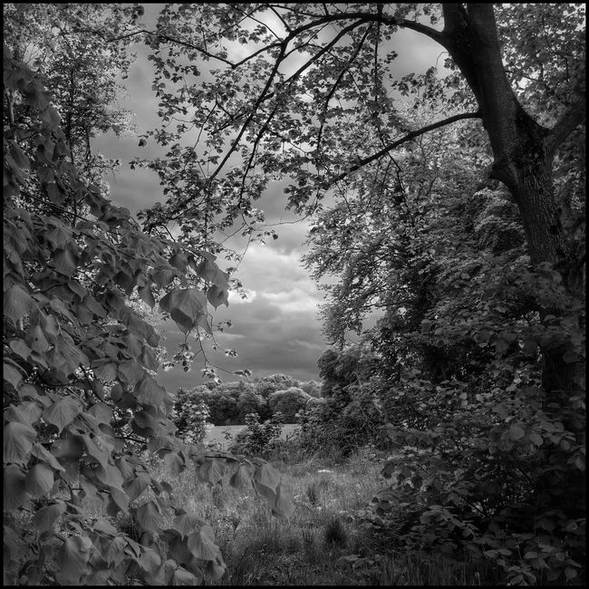 In the Distance Nature Flaneur Scotland Tree_collection  Light And Shadow Enjoying Nature Clouds And Sky Black And White Blackandwhite