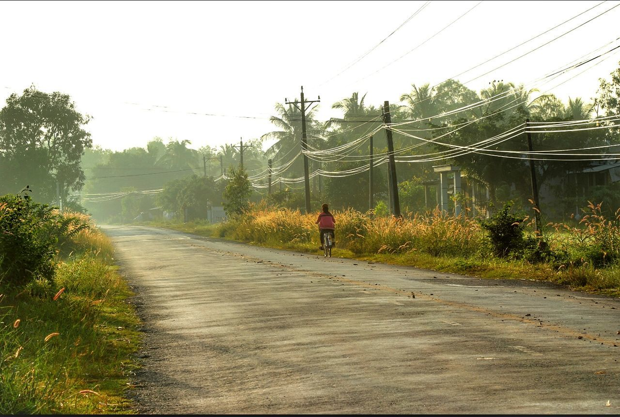tree, real people, one person, nature, men, the way forward, road, day, transportation, outdoors, full length, cable, electricity pylon, growth, sky, grass, beauty in nature, mammal, people