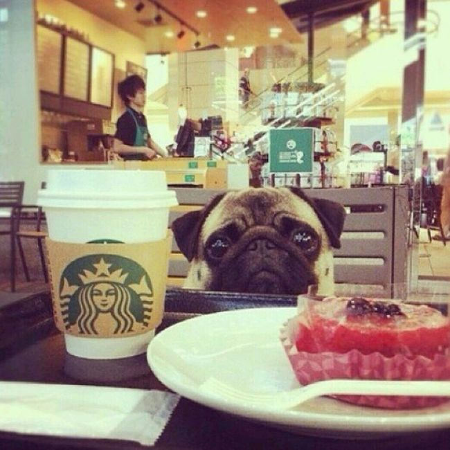 He so adorable Starbucks Cutepuppy Me And My BFF #StarbucksDate 8:07