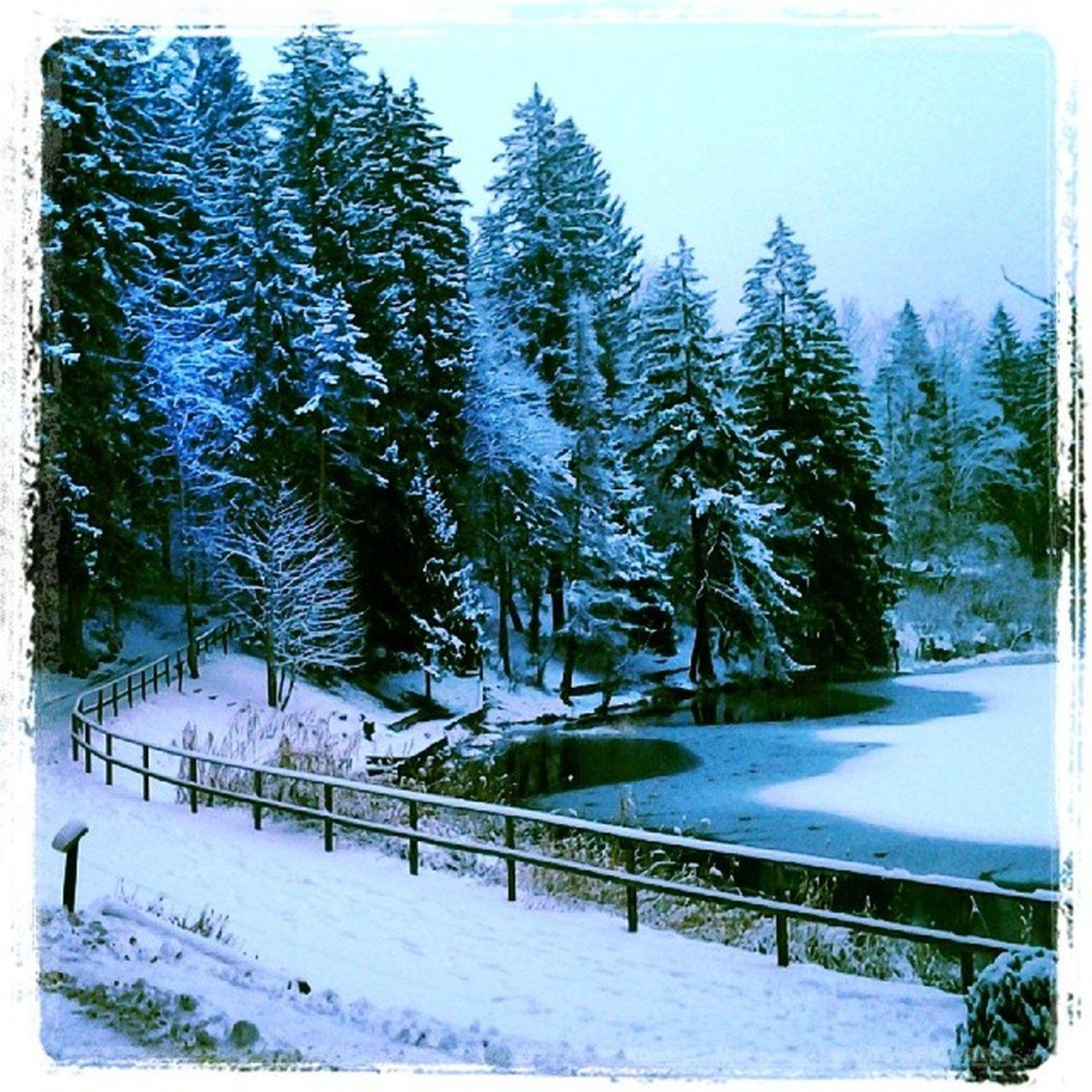 Abete Cei Lago Freddo