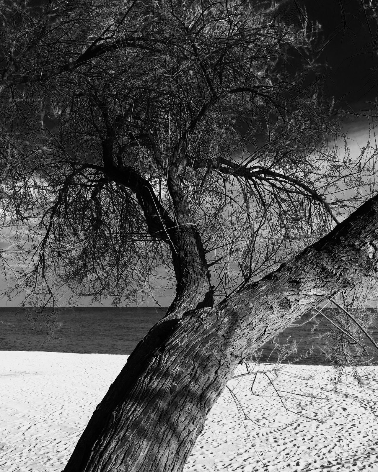 Tree Tree Trunk Landscape Beach Beachphotography Nature Nature_collection Nature Photography IPhoneography Iphoneonly Blackandwhite Black And White EyeEm Best Shots - Black + White Black & White Blackandwhite Photography Bw_collection EyeEm Gallery Eye4photography  EyeEm Nature Lover EyeEm Bnw