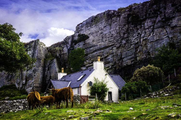 Scottish Cottage, Elgol, Isle of Skye Animal Themes Architecture Beauty In Nature Building Exterior Built Structure Cloud - Sky Day Domestic Animals Grass Mammal Mountain Nature No People Outdoors Sky Tree