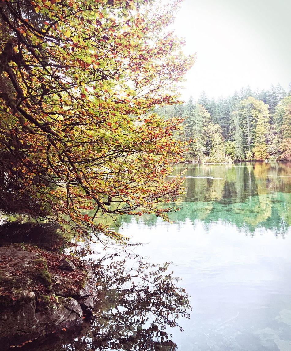 Badersee Tree Water Nature Autumn No People