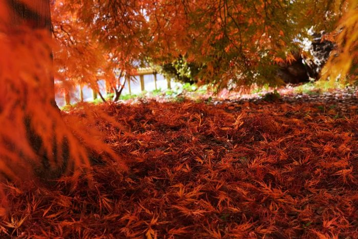 Carpet of the maple Hugging A Tree Autumn Relaxing Taking Photos