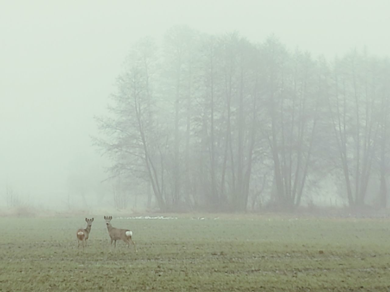 Roe Deer Fog Nature Tree No People Animal Themes Cold Temperature Beauty In Nature Animals In The Wild Landscape Roes Deer Exceptional Photographs Poland Poland Nature