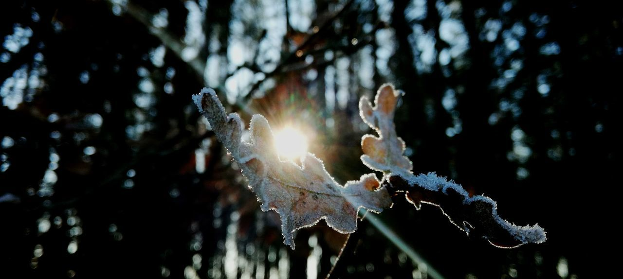 winter, cold temperature, snow, tree, frozen, weather, icicle, close-up, ice, nature, focus on foreground, no people, outdoors, branch, day, beauty in nature, fragility