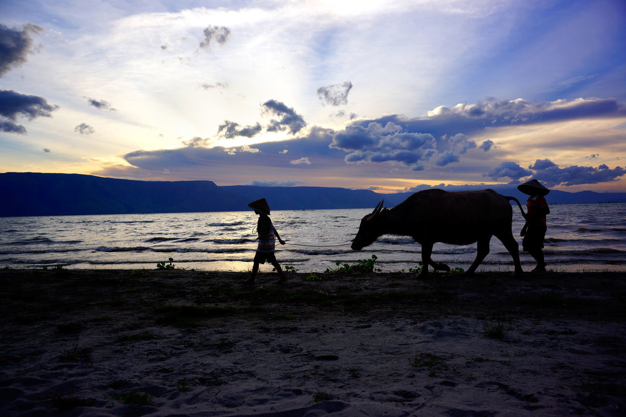 Silhouette of two boys and a cow walking on a sunset beach at nightfall to wash it with water from the ocean in asia, Indonesia. Asian  Bali, Indonesia Beach At Night Beach Photography Carabao Coastline Landscape Cow Evening Walk Island Life Nightfall Blues Ocean People Sand Sea And Sky Seascape SeashoreWalk Shoreline Silhouette Photography Sky And Clouds Sunrays Through The Clouds Sunset Sky And Clouds Sunset Sky Nature Together Two Children Walk On The Beach  EyeEmNewHere