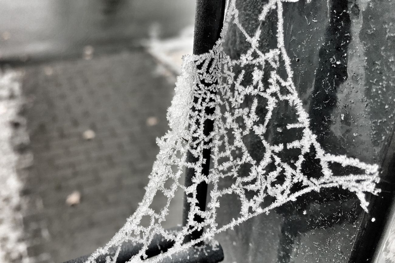 White frost at spiderweb Spiderweb Frost Frosty White Frost Spider Outdoors Nature Walking Around IPhoneography Beauty In Nature Nature Photography Open Edit Taking Photos Check This Out Winter