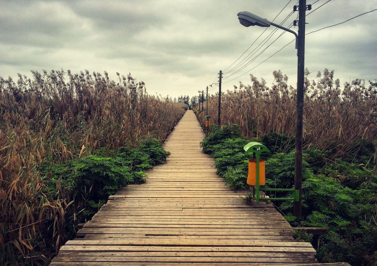 Iran♥ Iran Gilan Astane Pole Chubi Kiyashahr The Wooden Bridge Bridge Autumn Fall
