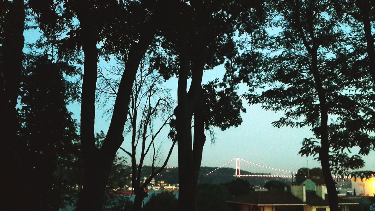 Nature Beauty In Nature Grove Nightphotography Night View Night Lights City Lights City Life Copse Of Trees Copse Copse On The Hill Tree Eyeemphotography Sightseeing Bridge Sea Seaside Sea View Photography EyeEm Best Shots EyeEm Gallery EyeEm Nature Lover Istanbul Sarıyer Sariyersahil