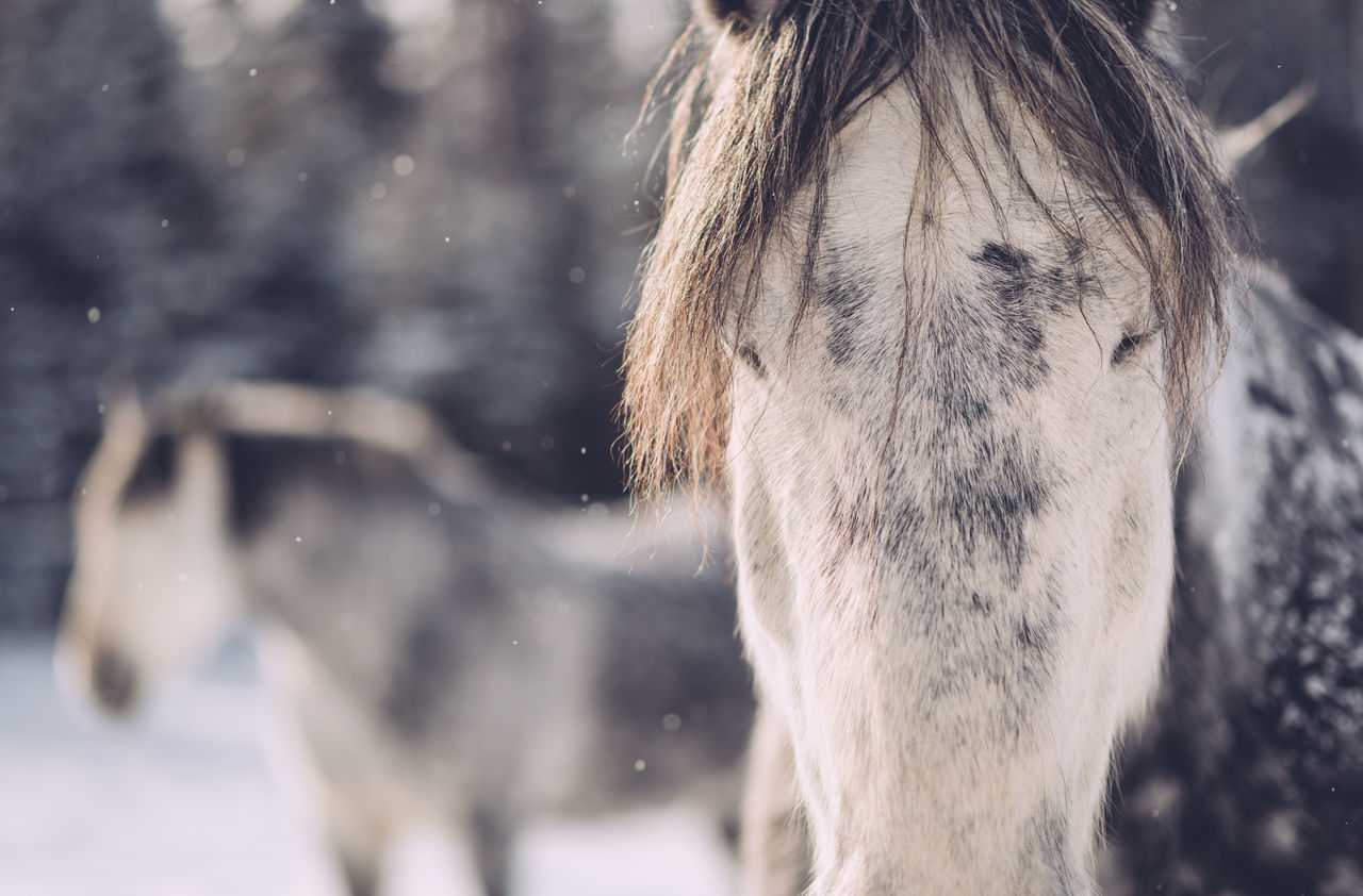 Animal Themes Close-up Cold Temperature Day Domestic Animals Horse Horses Livestock Mammal Nature One Animal One Person Outdoors Snow Working Animal