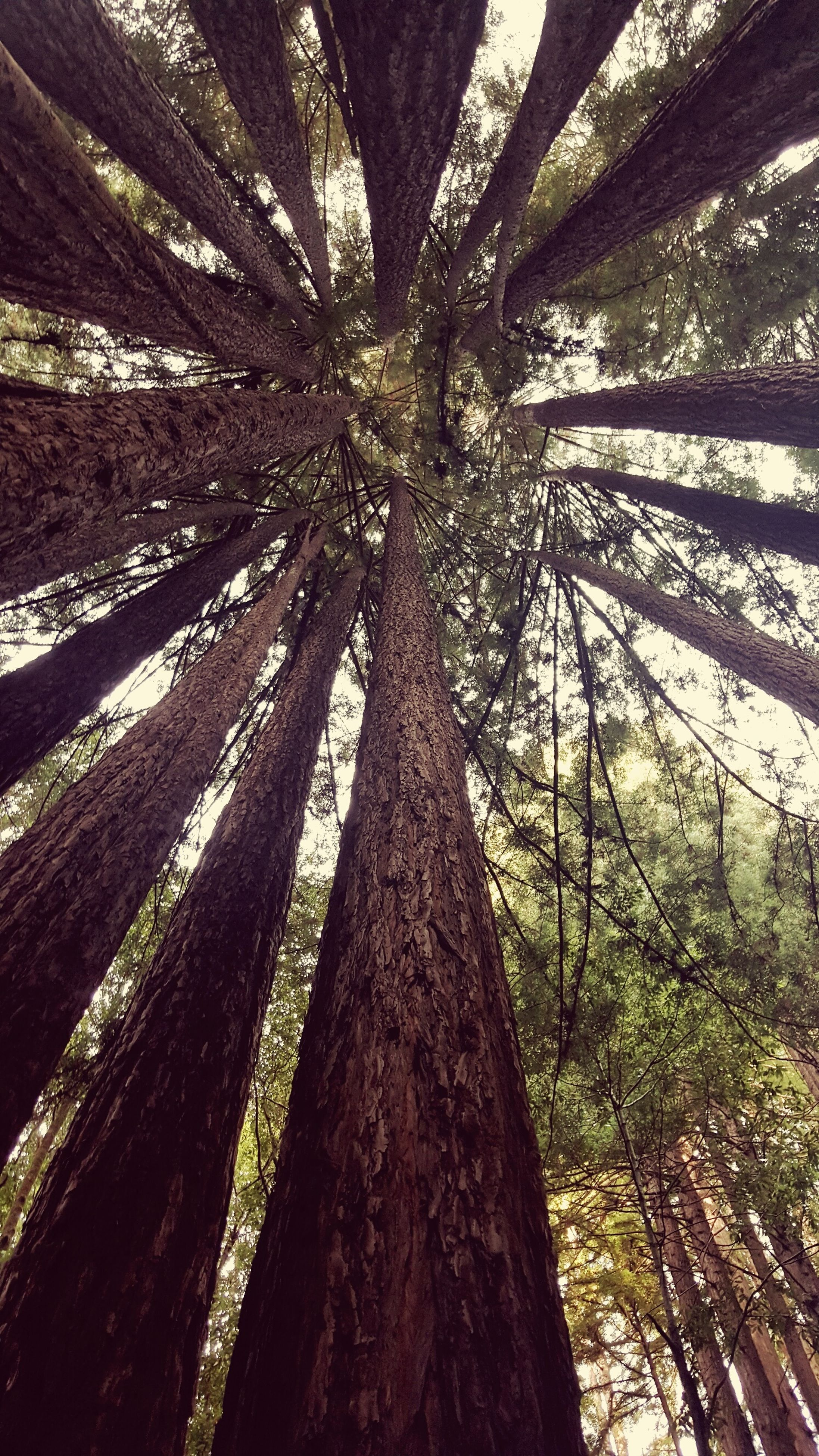 tree, tree trunk, growth, tranquility, nature, low angle view, beauty in nature, branch, tranquil scene, day, sunlight, outdoors, no people, scenics, forest, wood - material, woodland, sky, textured, tall - high