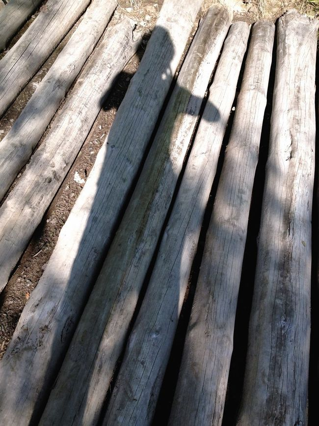 Selfportrait Wood
