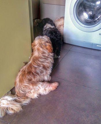 File to the eatbox... Shih Tzu Shih Tzu Love Pets Dog Loyalty Taking Photos Sony Dsc Hx60v Photo♡ Animal Photography Dogs I Love My Dog