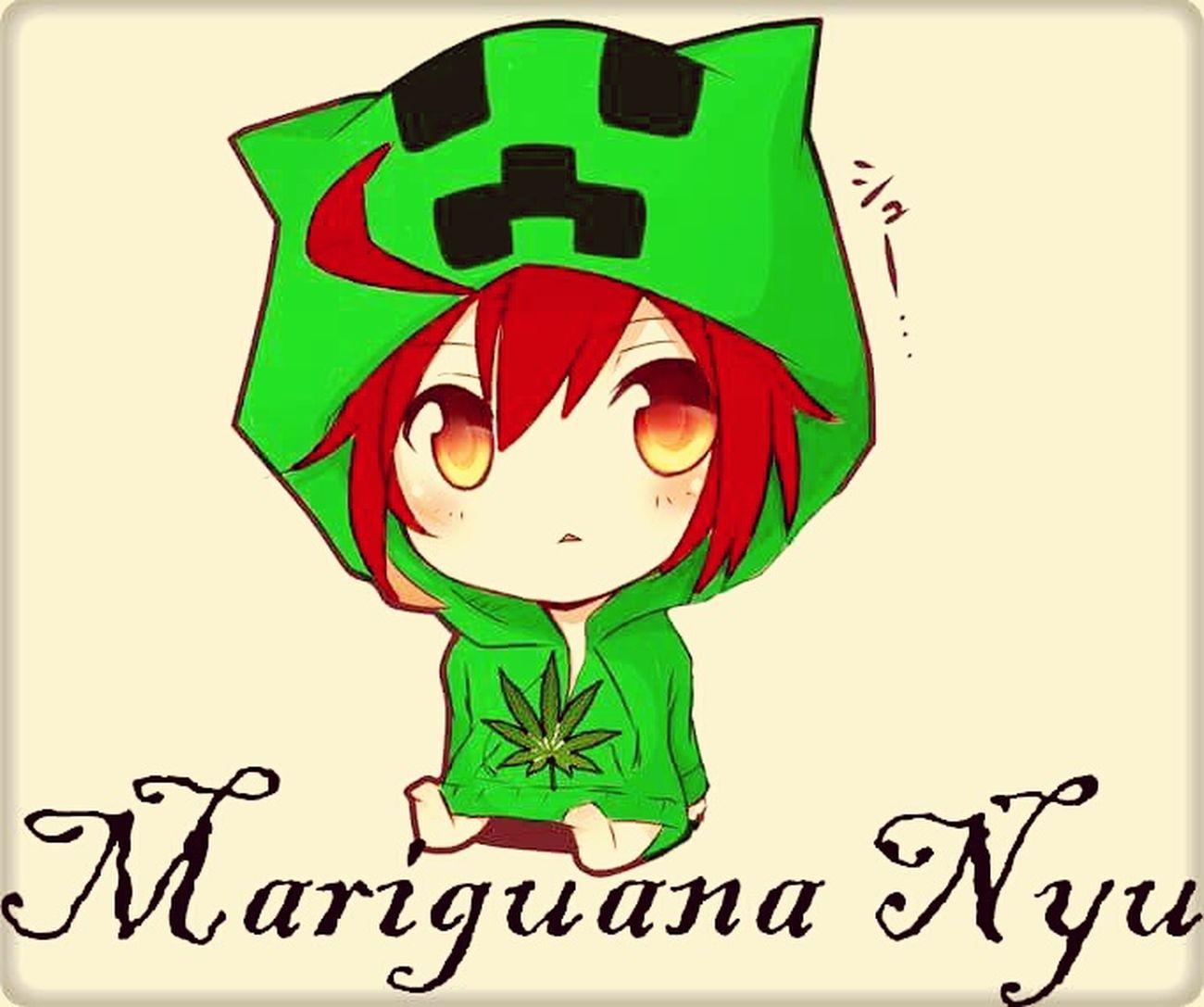 Nyu Marijuana Marihuana Mariguana