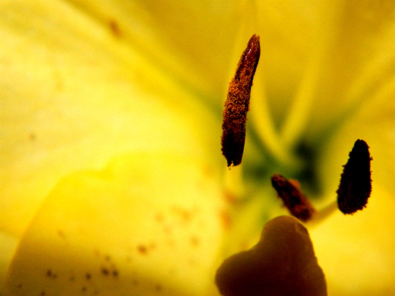 close-up, growth, plant, nature, yellow, no people, outdoors, fragility, day, beauty in nature, flower, freshness, flower head