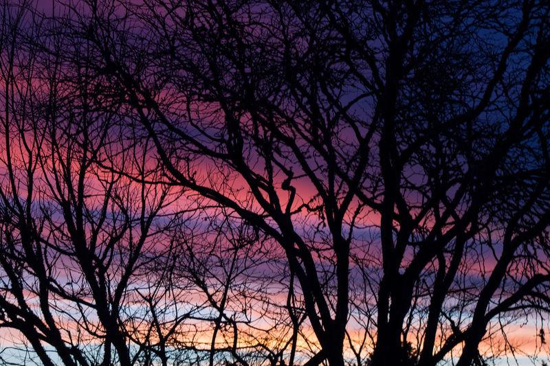 Beautiful Sunset Night Sky through Trees First Eyeem Photo