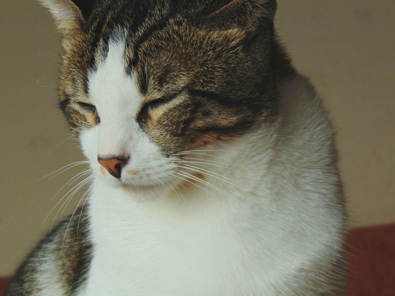 Nice Photo Kevin Photography Cat♡ Jolie❤ Sr Kevin Feline El Gordo Cat Gatito♥ Pets Sleeping Cat Domestic Cat Domestic Animals One Animal Animal Themes Mammal Indoors  Whisker Portrait No People Close-up Day