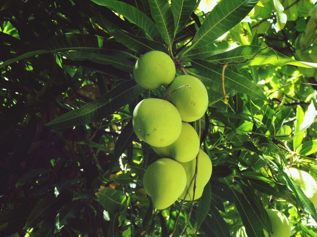 Beautiful stock photos of brazil, Bunch, Close-Up, Day, Fruit