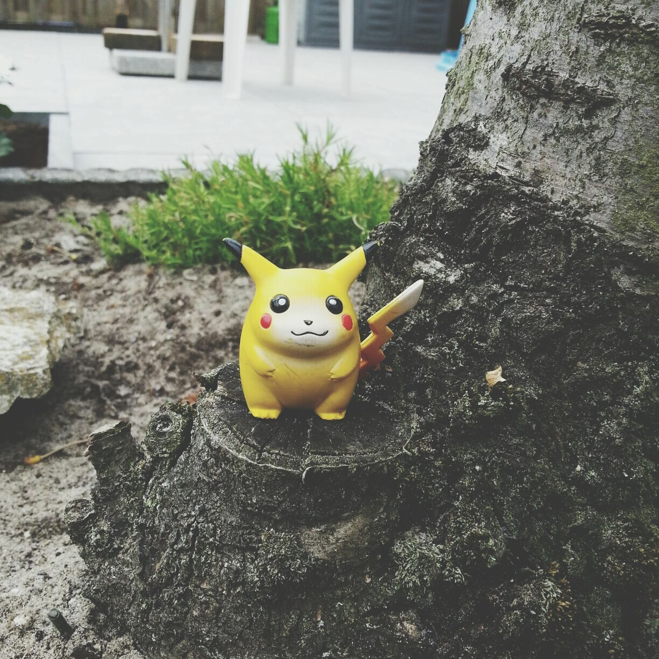 Guess who I've found in my backyard? First Eyeem Photo Pikachu Pokémon