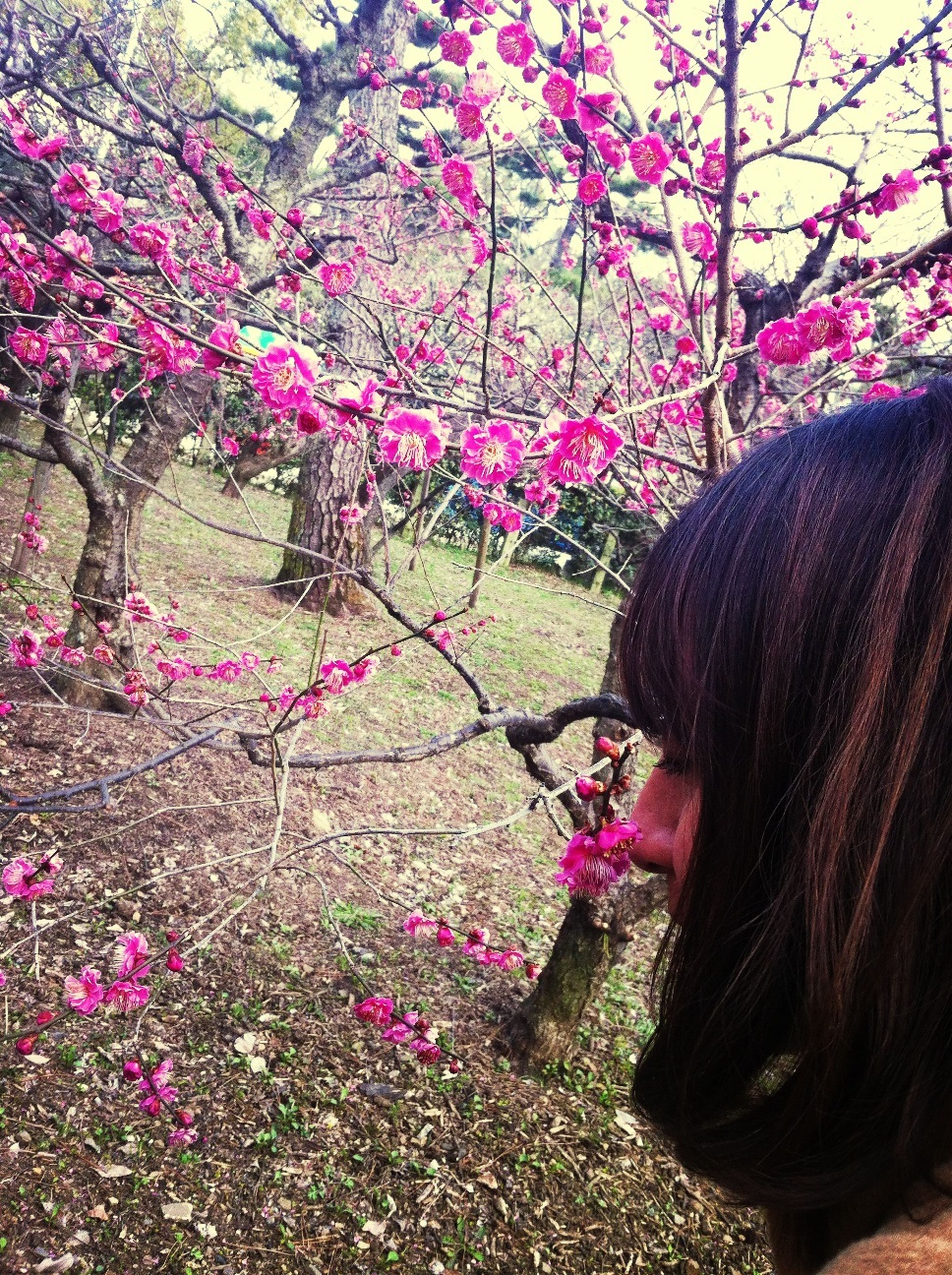 flower, pink color, tree, freshness, beauty in nature, growth, fragility, nature, blossom, petal, blooming, in bloom, park - man made space, branch, plant, day, person, springtime