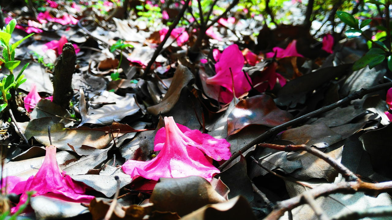 The Fallen Flower The Fallen Leaves Windy Day Cool Pleasures Enjoying Life