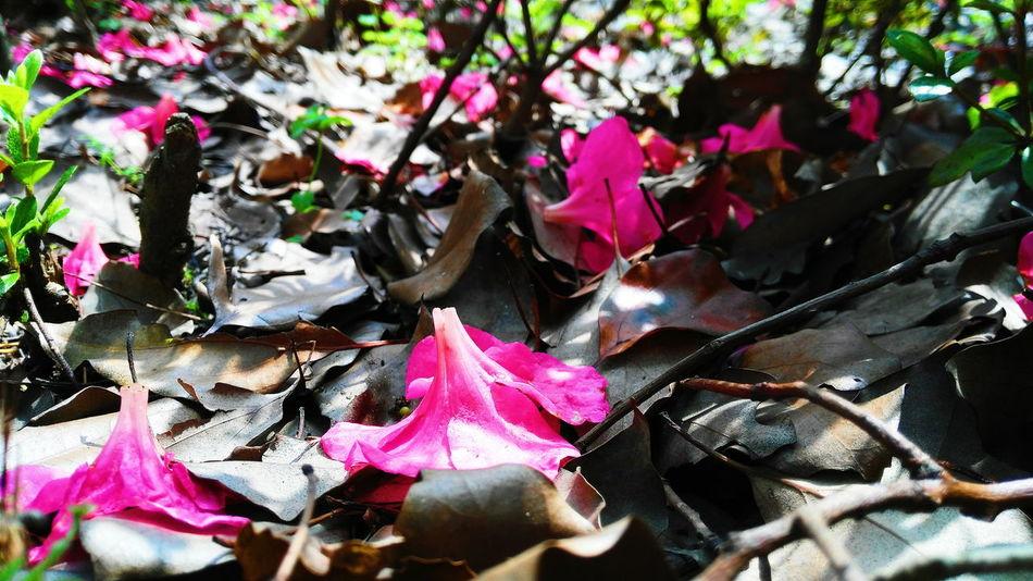 The Fallen Flower The Fallen Leaves Windy Day Cool Pleasures Enjoying Life